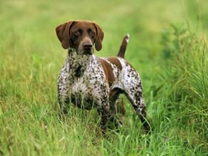 Common GSP Colour